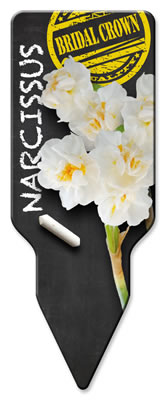 Narcissus_Bridal Crown_Westendflowerbulbs