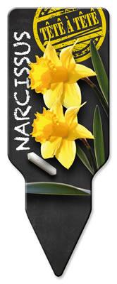 Narcissus_Tête-à-Tête_Westendflowerbulbs